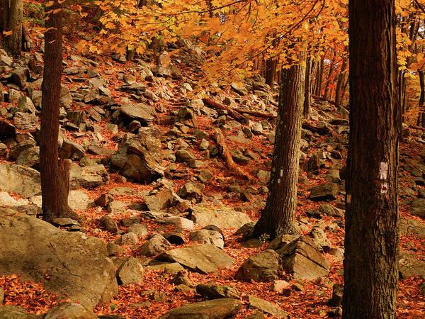Photograph - Autumn At In Ny by Raymond Salani III