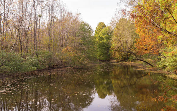 Photograph - Autumn At Jeffries Creek Nature Park by MM Anderson