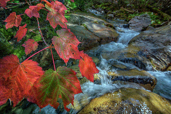 Wall Art - Photograph - Autumn At Katahdin Stream by Rick Berk