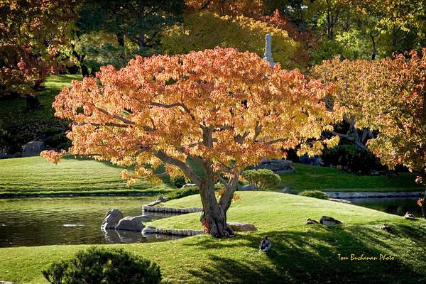 Wall Art - Photograph - Autumn At Nikka Yuko by Tom Buchanan