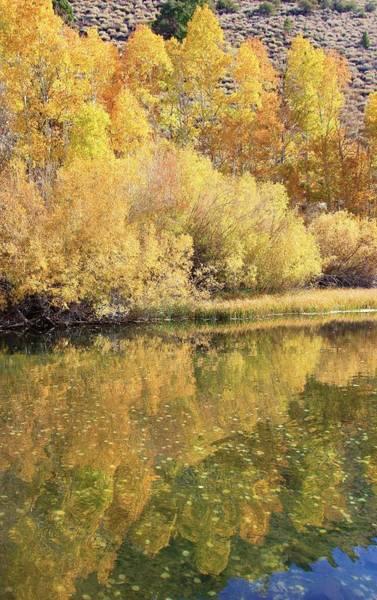 Photograph - Autumn At Rush Creek by Sean Sarsfield