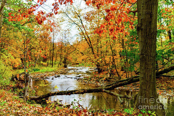 Photograph - Autumn At The Creek by William Norton