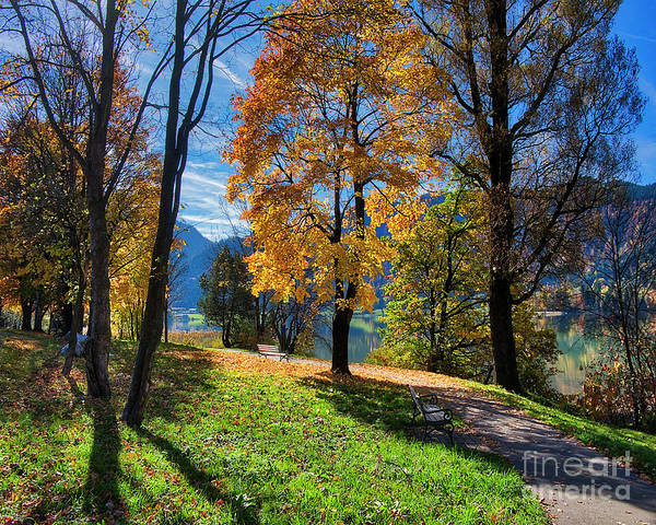 Photograph - Autumn At The Lake by Edmund Nagele