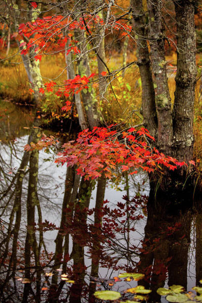Wall Art - Photograph - Autumn At The Pond by Karol Livote