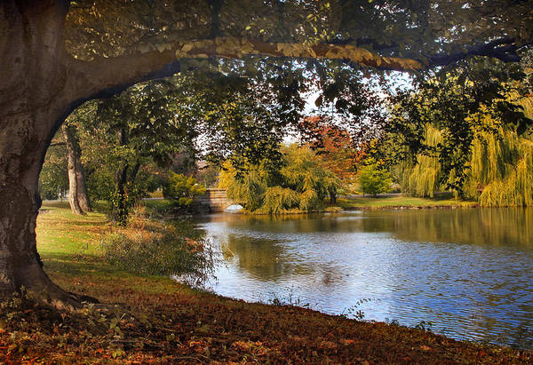 Photograph - Autumn At Woodlawn by Jessica Jenney