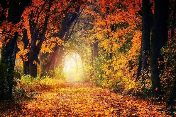 Photograph - Autumn Avenue by Autumn Scenes