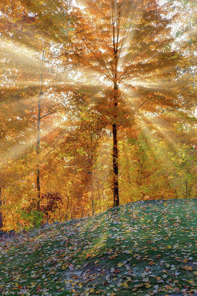 Photograph - Autumn Beams by Bill Wakeley