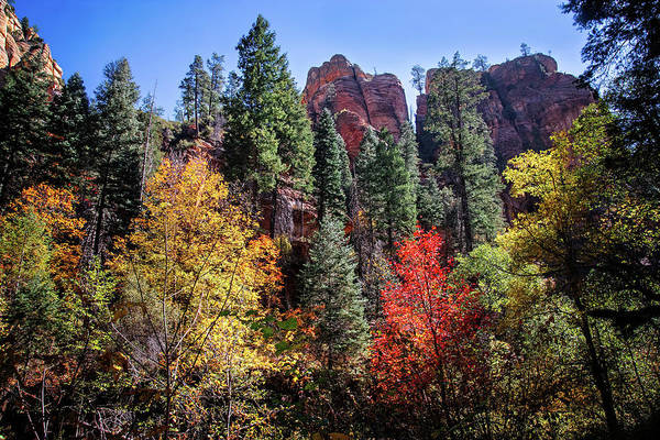 Photograph - Autumn Beauty On The West Fork Trail by Lynn Bauer