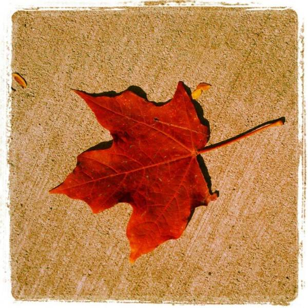 Photograph - Autumn Beauty by Tammy Winand