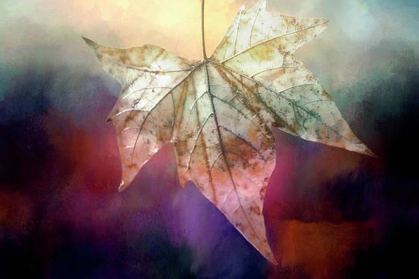 Wall Art - Digital Art - Autumn Beauty by Terry Davis