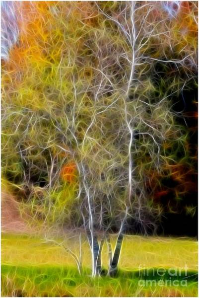 Photograph - Autumn Birch by Deborah Benoit