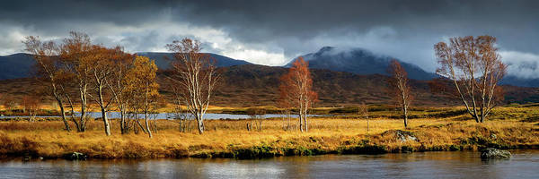 Photograph - Autumn Birches by Peter OReilly