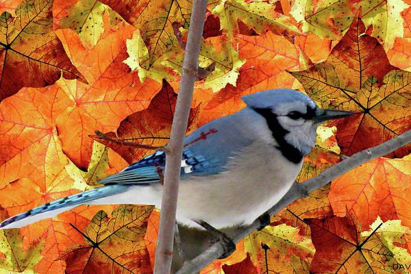 Wall Art - Mixed Media - Autumn Blue Jay by Debra     Vatalaro