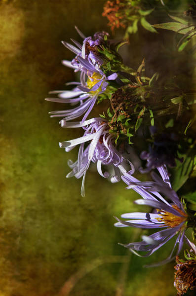 Wall Art - Photograph - Autumn Blues by Susan Capuano