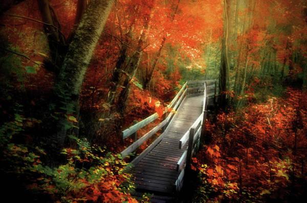 Photograph - Autumn Boardwalk by Tara Turner