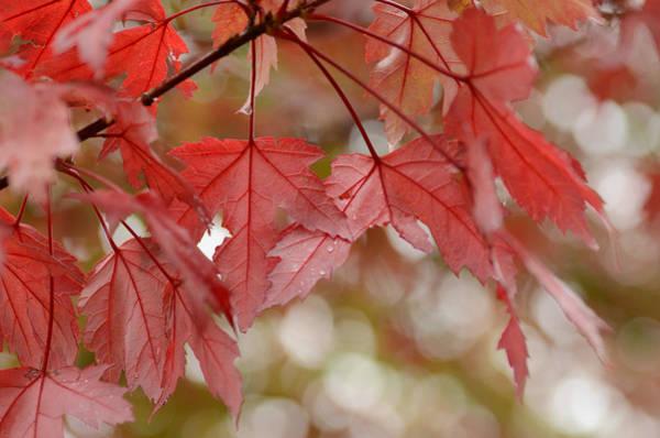 Photograph - Autumn Bokeh by Fraida Gutovich