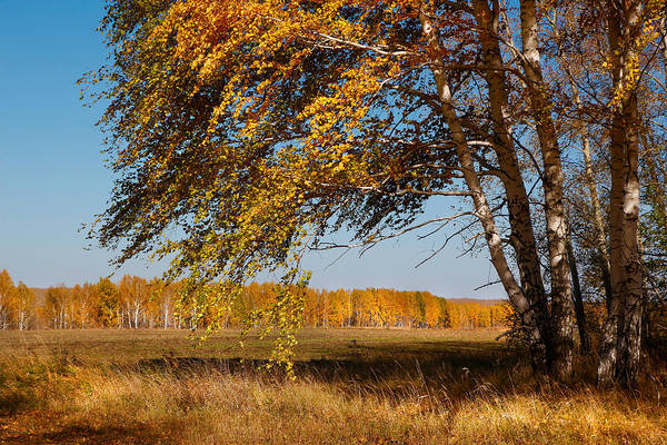 Photograph - Autumn Breeze by Victor Kovchin