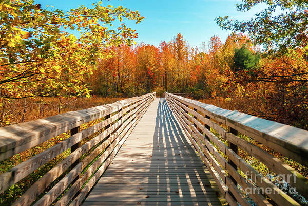 Photograph - Autumn Bridge by Anthony Sacco