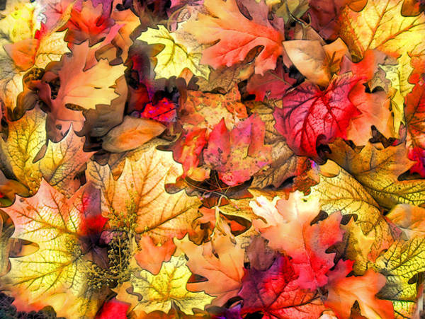Wall Art - Digital Art - Autumn Bright by Rose Guay