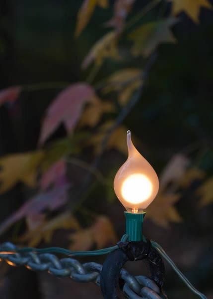 Autumn Bulb Art Print