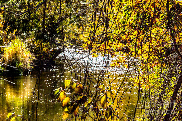 Photograph - Autumn By The Creek by William Norton