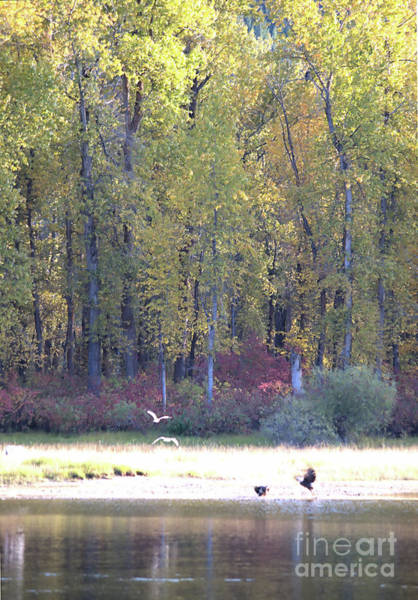 Photograph - Autumn By The River by Victor K