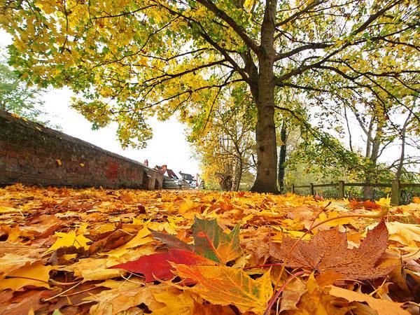 Photograph - Autumn Carpet by Gill Billington