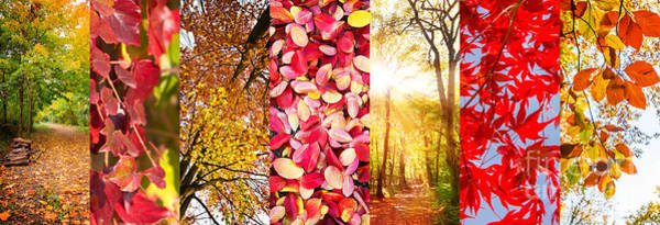 Wall Art - Photograph - Autumn Collage by Delphimages Photo Creations