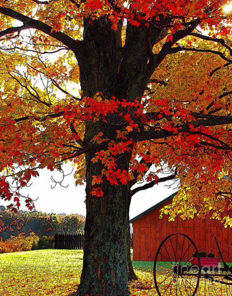 Diane Berry Wall Art - Digital Art - Autumn Color Dance by Diane E Berry