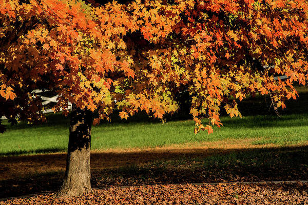 Photograph - Autumn Color by Don Johnson