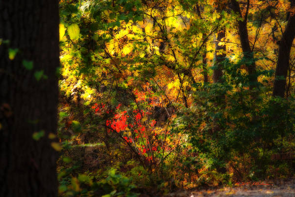 Photograph - Autumn Color by Edward Peterson