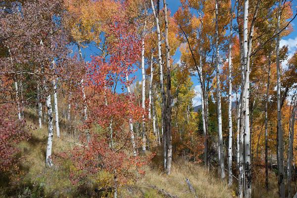 Photograph - Autumn Color In Colorado by Cascade Colors