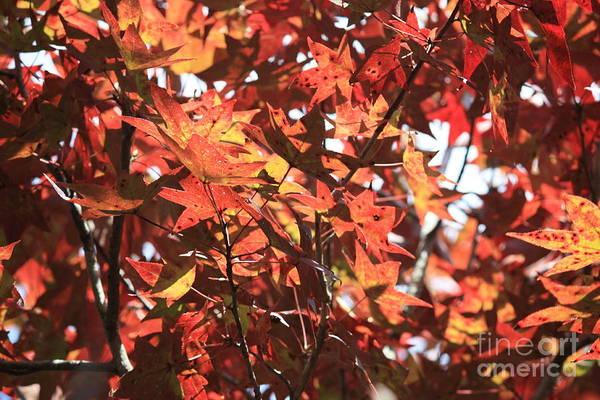 Photograph - Autumn Color In Florida by Carol Groenen
