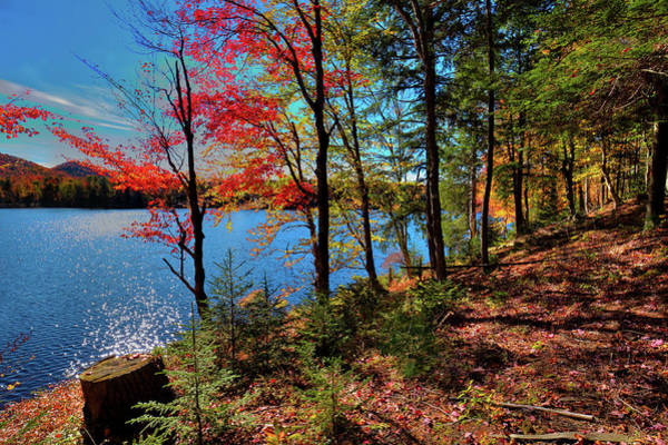 Photograph - Autumn Color On The Hillside by David Patterson