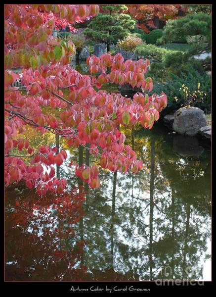 Photograph - Autumn Color Poster by Carol Groenen