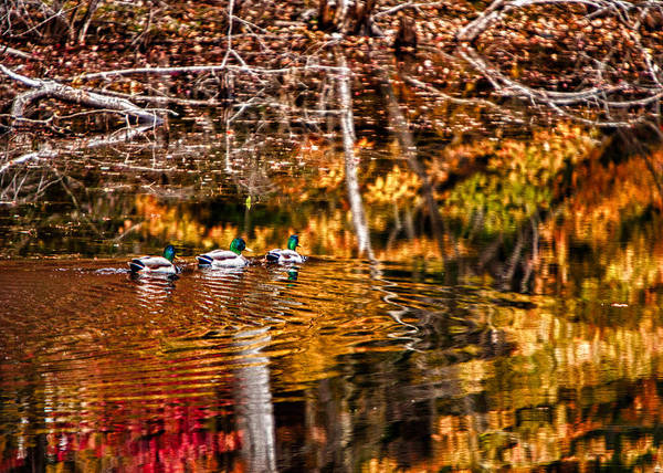 Photograph - Autumn Color Reflections by Jeff Folger