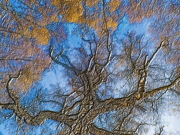Digital Art - Autumn Colorful Birch Trees With Blue Sky by Odon Czintos