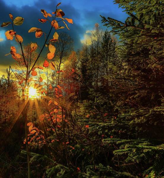 Photograph - Autumn Colors At Sunset by Rose-Marie Karlsen