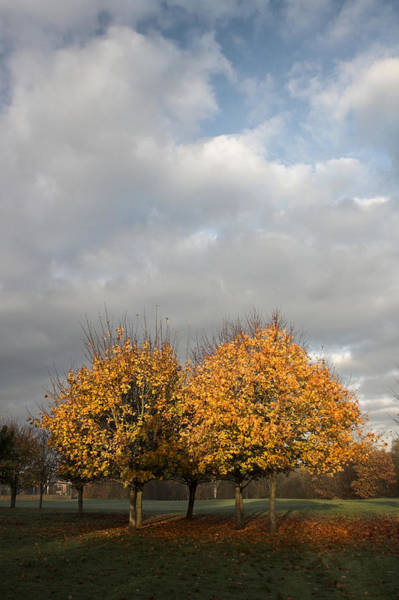 Photograph - Autumn Colors At The University Of Limerick Ireland by Pierre Leclerc Photography