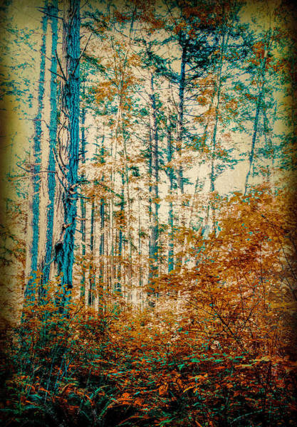 Photograph - Autumn Colors by Barry Weiss