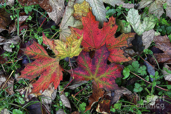 Wall Art - Drawing - Autumn Colors by Diane E Berry