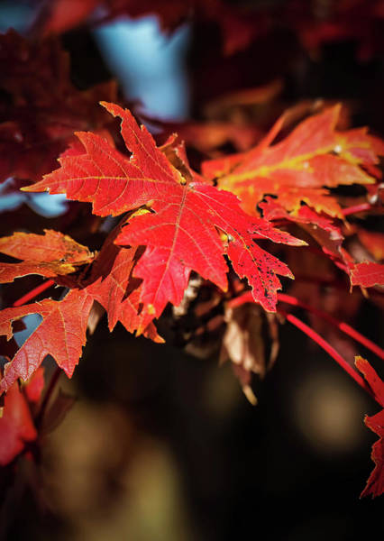 Wall Art - Photograph - Autumn Colors by Elijah Knight