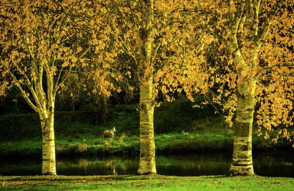 Gleeson Photograph - Autumn Colors by Fergal Gleeson