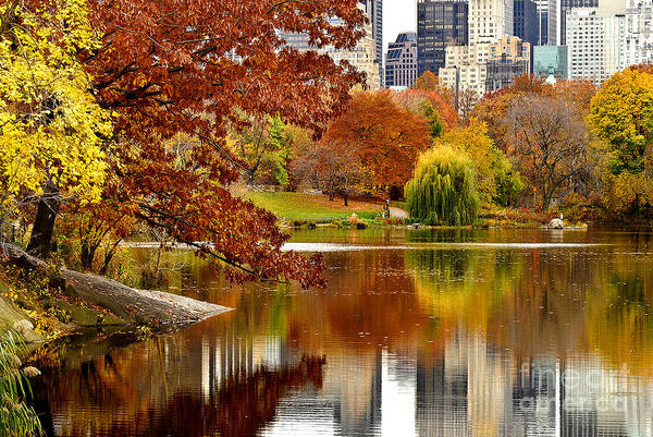 Sabine Photograph - Autumn Colors In Central Park New York City by Sabine Jacobs