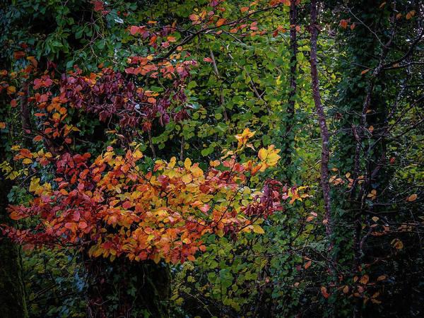 Photograph - Autumn Colors In Ireland by James Truett