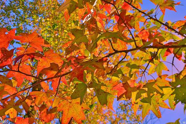Photograph - Autumn Colors by Lisa Wooten