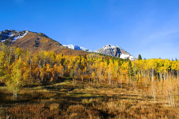 Photograph - Autumn Colors by Mark Smith