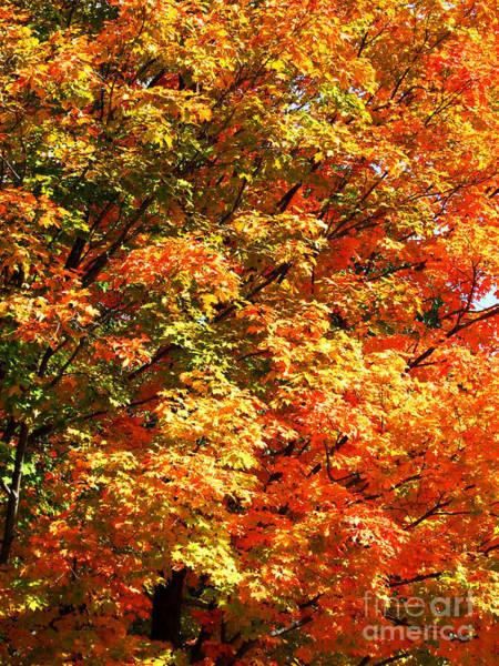 Photograph - Autumn Colors Photograph by Kristen Fox
