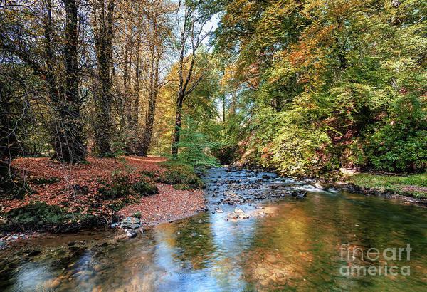 Wall Art - Photograph - Autumn Colour At Ardgarten Forest by Janet Burdon