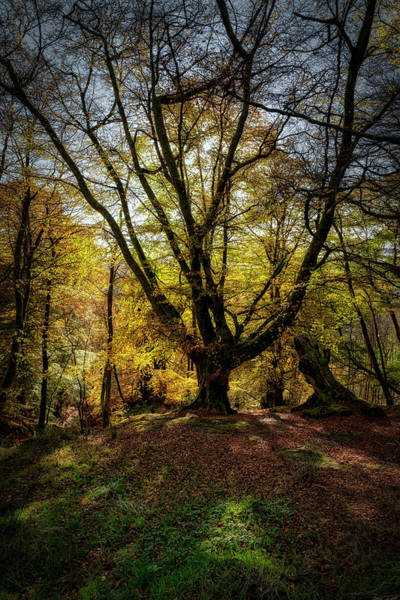 Photograph - Autumn Colours In The Forest by Jeremy Lavender Photography